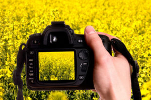 Camera with yellow field in background